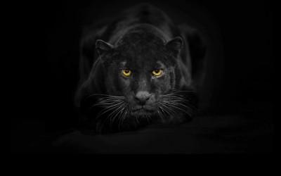 Schamanisches Krafttier Jaguar